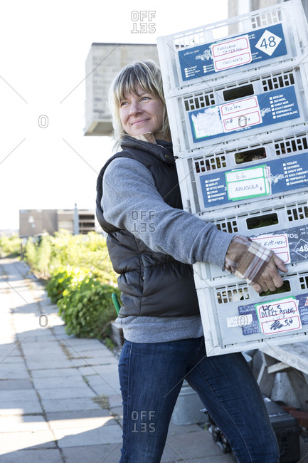 Farmer moving crates of freshly picked salad greens