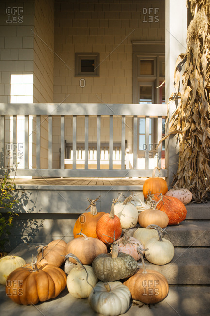 Variety of pumpkins and corn stalks on a rustic porch
