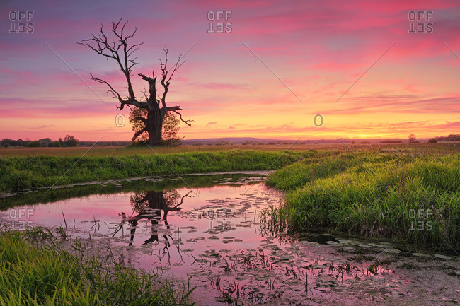 Dead tree in a meadow near a pond in a colorful sunset