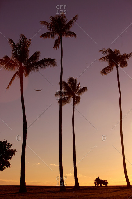Honolulu, Hawaii, USA - July 14, 2012: A tourist relaxes under palm trees