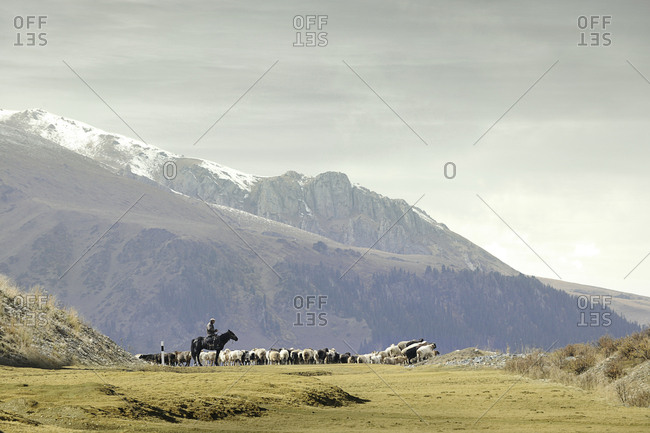Xinjiang, China - September 29, 2014: A shepherd watches his grazing herd