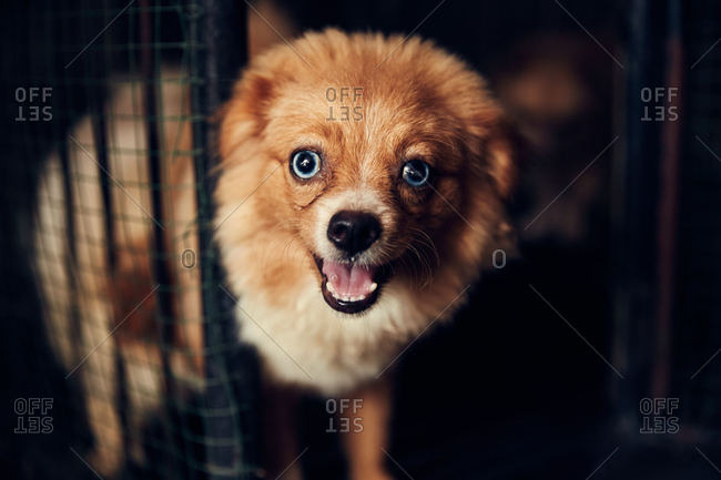 Small fluffy brown dog