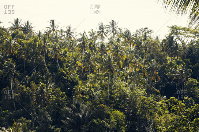 Palm trees in the jungle