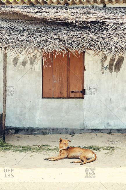Dog under awning in Sri Lanka