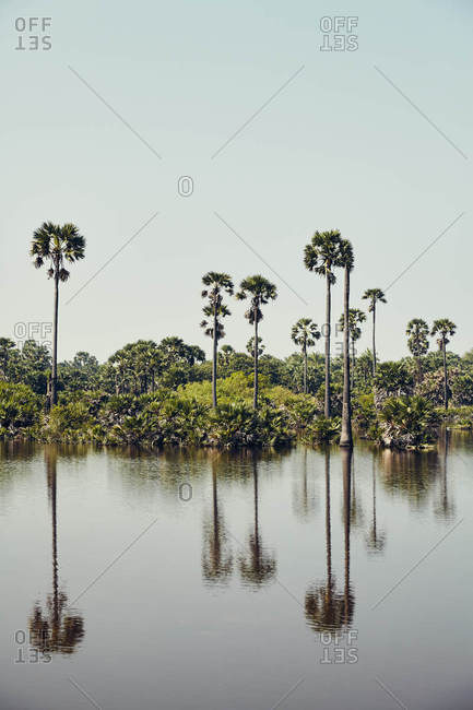 Palm trees reflected in water, Sri Lanka