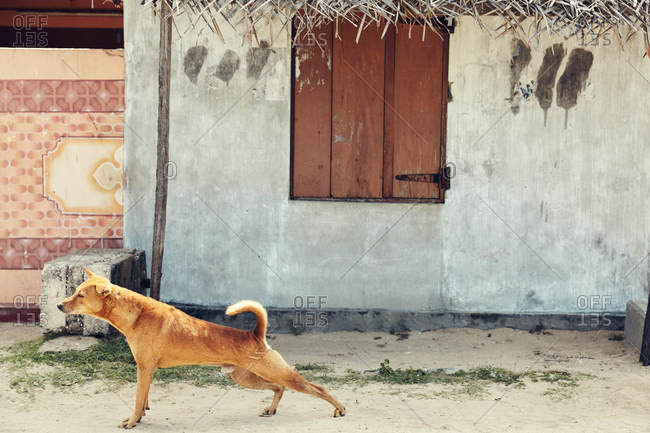 Dog in dirt street by house