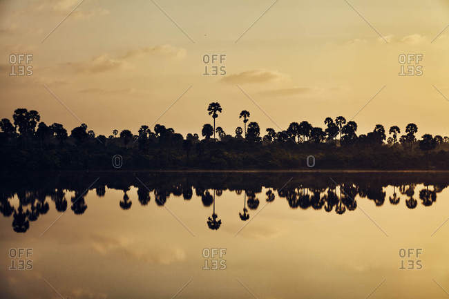 Palm trees in reflected silhouette