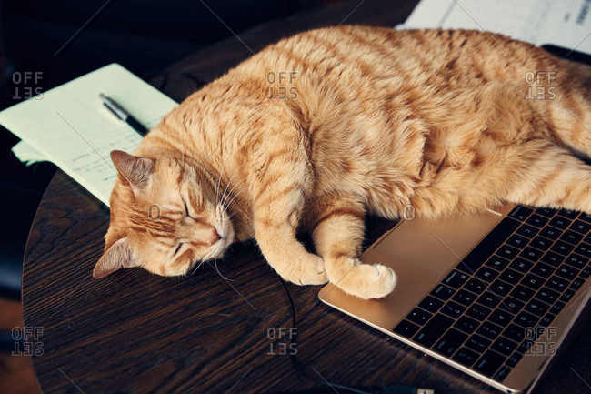Cat curled up by laptop