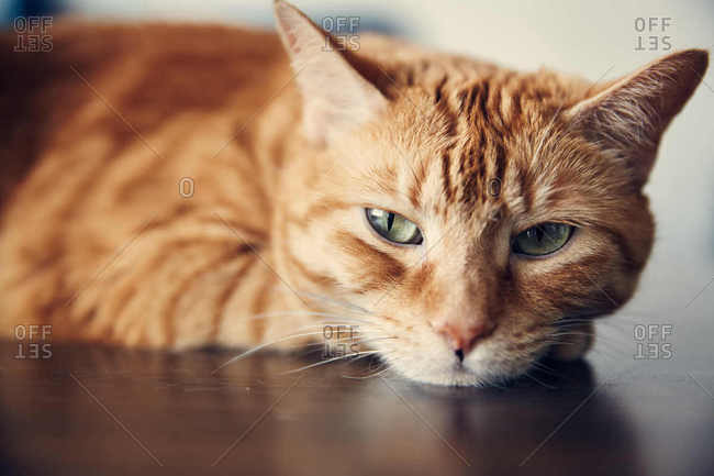 A cat lying on a table