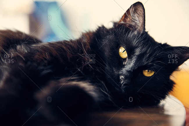 A black cat lying on table