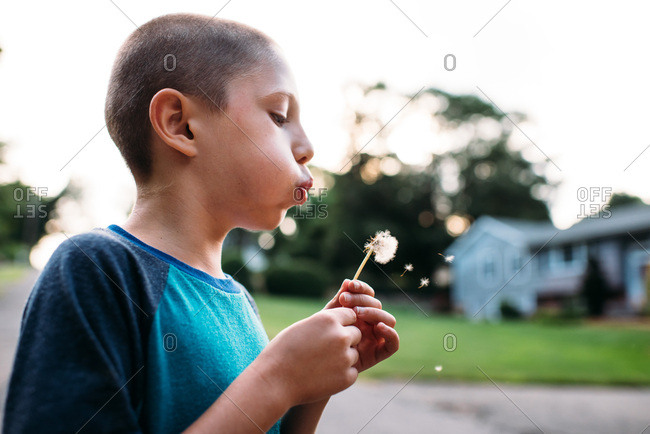 Boy blowing a dried dandelion