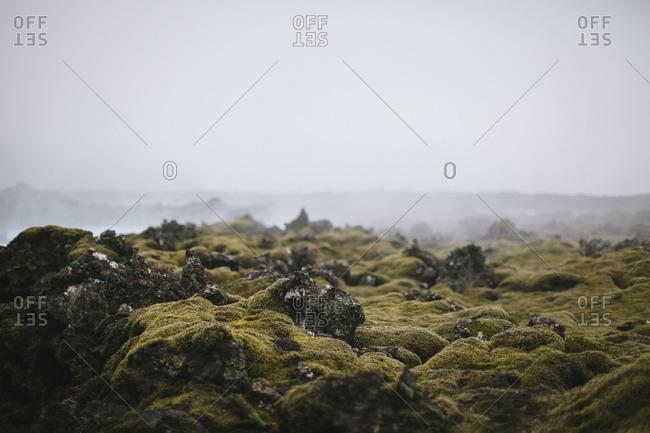 Empty lava field in Iceland