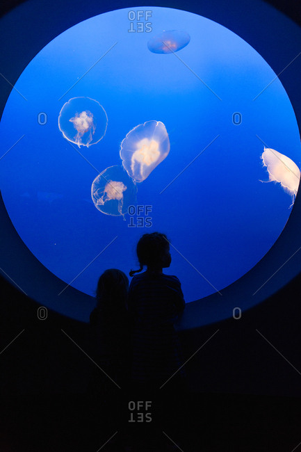 Children watching jellyfish in an aquarium