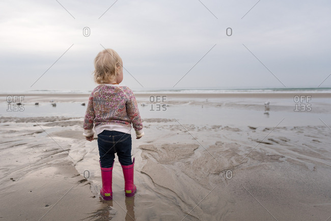 Back view of toddler girl watching seagulls on beach