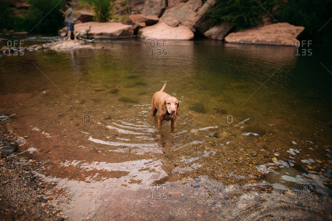 Dog standing in river water