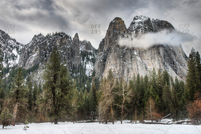 Pine trees in winter, Yosemite Valley