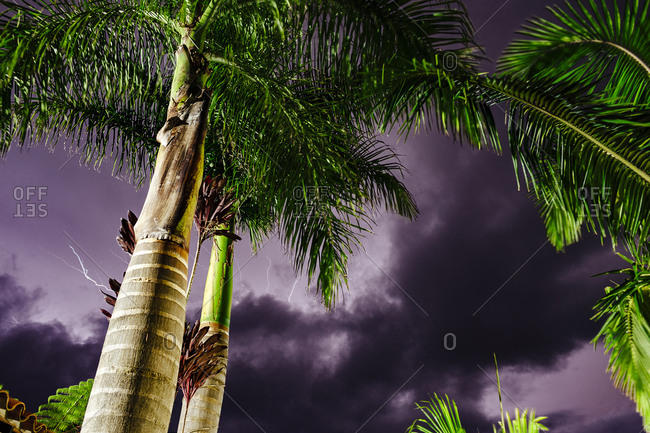 Violet sky full of lightning with two palm trees in symmetry in Guatape, Colombia