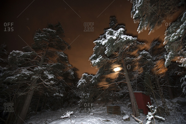 Forest at night in winter