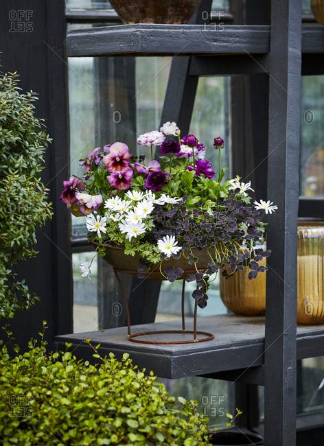Flowers in outdoor pot
