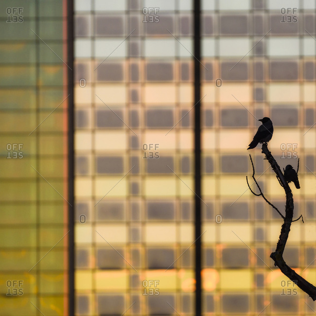 Silhouette of bird perching on branch