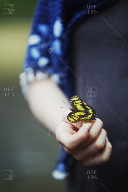 Butterfly on childs hand