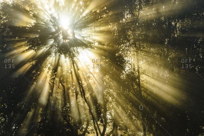 Sunbeams shining through trees