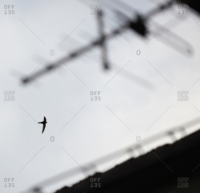 Silhouette of bird flying - Offset