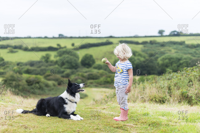 Cornwall, England - September 4, 2016: A girl throws a ball for a border collie dog