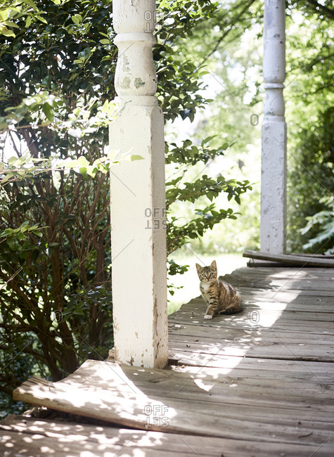 Cat on weathered porch