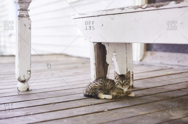 Cat on porch under weathered bench