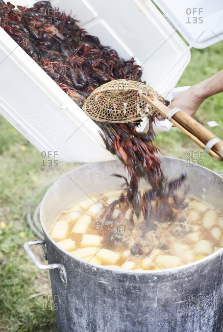 Pouring crawfish into pot