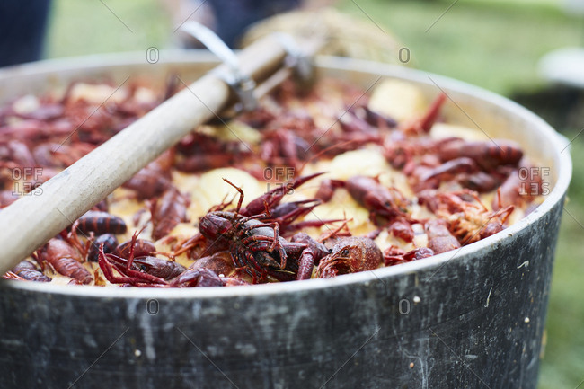 Crawfish cooking in a pot
