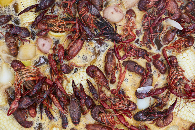 Crawfish cooking in pot