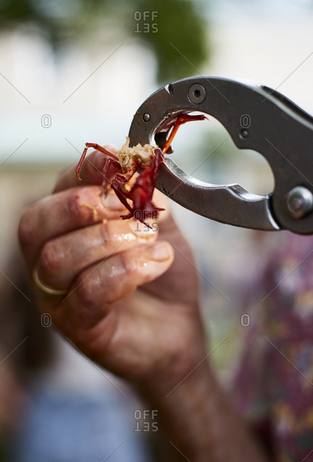 Cracking crawfish with a tool