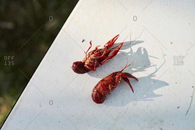 Two crawdads in sunlight