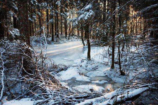 Frozen river in snowy forest
