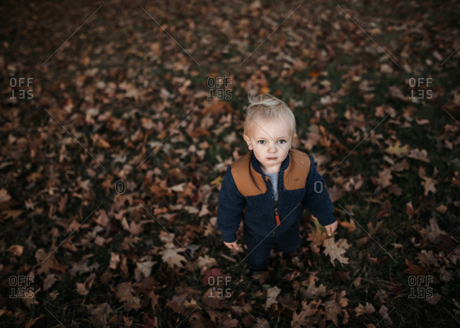 Toddler boy standing around fall leaves
