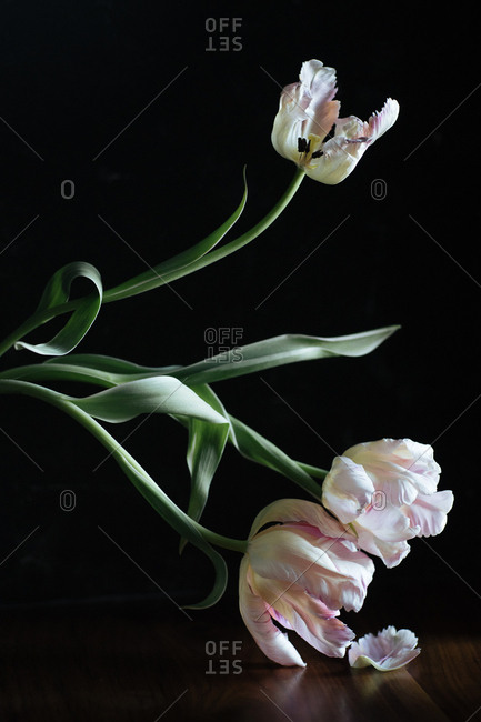 Dying flowers on a table