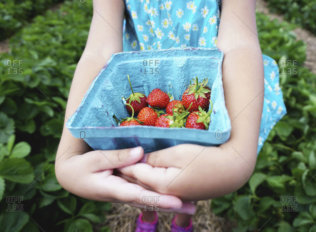 Girl holding freshly picked strawberries
