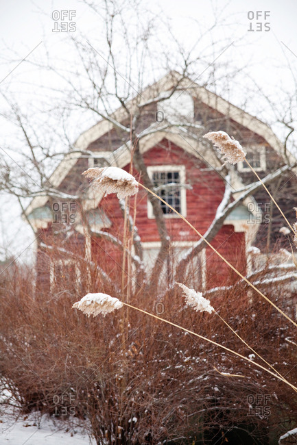 Tall brown grass outside of a barn in the snow