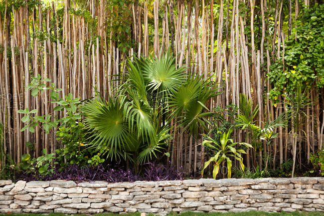 Low stone wall and tall tropical trees growing outdoors