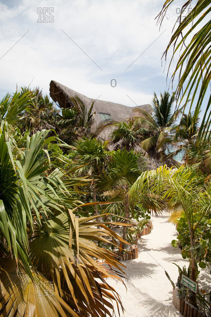 White sand path between tropical plants on a beach