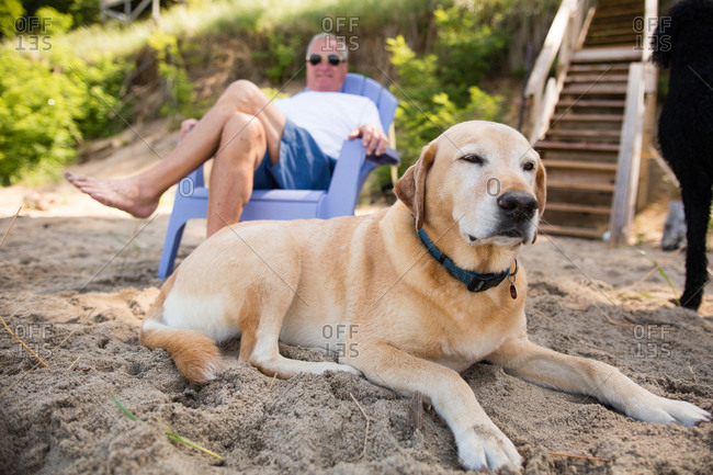 Dog lying in sand in front of a man on a beach