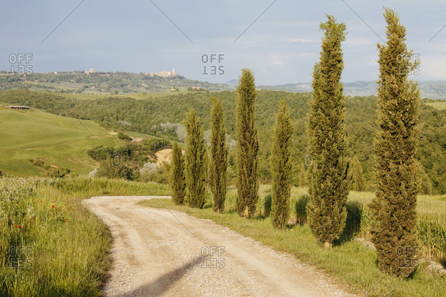 Winding dirt road lined with cypress trees