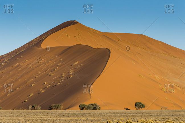 Giant Sand Dune 45, Sossusvlei, Namib-Naukluft National Park, Namibia, Africa