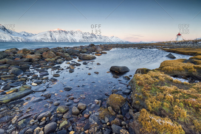 Grass and rocks frame the lighthouse surrounded by frozen sea and snowy peaks at dawn, Djupvik, Lyngen Alps, Troms, Norway, Scandinavia, Europe