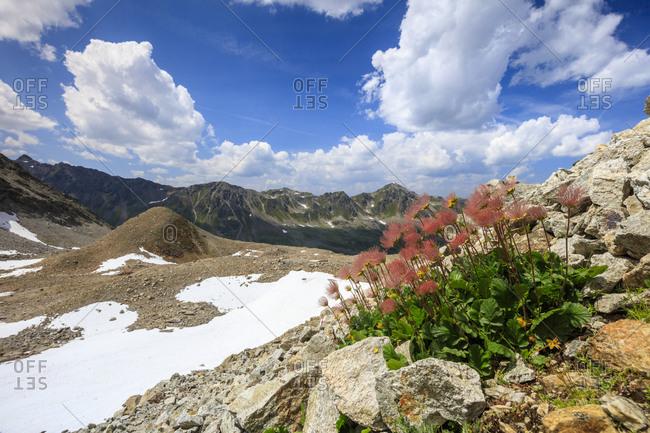 Colourful flowers in bloom framed by rocky peaks, Joriseen, Jorifless Pass, canton of Graubunden, Engadine, Switzerland, Europe