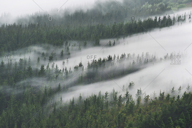 Spain- Basque Country- mist in the forest of Oiz