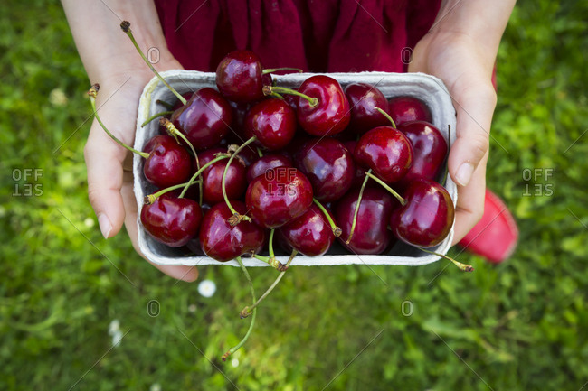 Girl\'s hands dress holding cardboard box of cherries- close-up