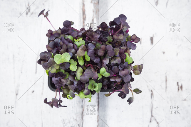 Organic Sango radish cress